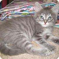 Adopt A Pet :: Zin - Agoura Hills, CA