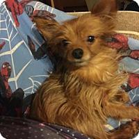 Adopt A Pet :: Jack (rbf) - Harrisonburg, VA