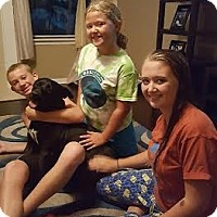 Adopt A Pet :: James Dean - Jacksonville, FL