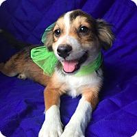 Adopt A Pet :: August -meet me 9/16 - Manchester, CT