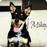Adopt A Pet :: Mikayla - Defiance, OH