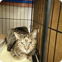 Adopt A Pet :: Dixie - Avon, OH