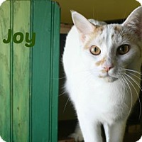 Adopt A Pet :: Joy - West Des Moines, IA