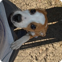 Adopt A Pet :: Spencer - Peyton, CO