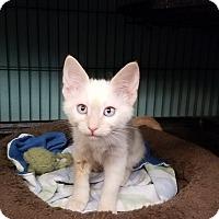 Adopt A Pet :: Farrah - Tomball, TX