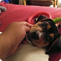 Adopt A Pet :: Kenny - Seminole, FL