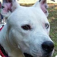Adopt A Pet :: Logan - Tampa, FL