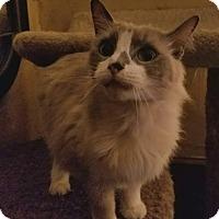 Adopt A Pet :: Linus - Ennis, TX