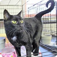 Adopt A Pet :: Lacy - Reeds Spring, MO