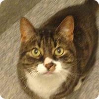Adopt A Pet :: Tony - Stafford, VA