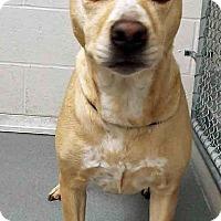 Adopt A Pet :: China - Channahon, IL