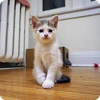 Adopt A Pet :: Petria - Mississauga, Ontario, ON