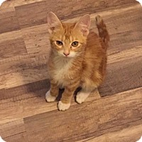 Adopt A Pet :: Opie Schafer - Dallas, TX