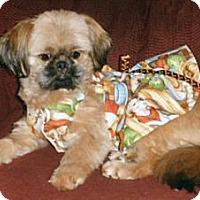 Adopt A Pet :: Gilda - Mooy, AL