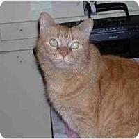 Adopt A Pet :: Simba - Pascoag, RI