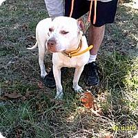 Adopt A Pet :: Annie - Dundas, VA
