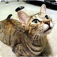 Adopt A Pet :: Crystal - Hurst, TX