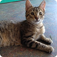 Adopt A Pet :: Danica - Topeka, KS