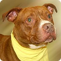 Adopt A Pet :: Mikey - Cincinnati, OH