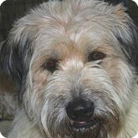 Adopt A Pet :: Barrett-MeetHim@DogGoneSmart - Norwalk, CT