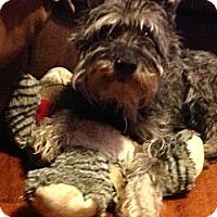 Adopt A Pet :: William - Wilmington, DE