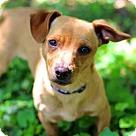 Adopt A Pet :: SWEET SARA