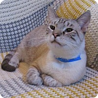 Adopt A Pet :: Alvin (Lynx-point Siamese) - Witter, AR