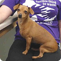 Adopt A Pet :: MOLLY - Oroville, CA