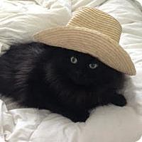 Adopt A Pet :: Barry - Toronto, ON