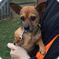 Adopt A Pet :: Atlas - Beavercreek, OH