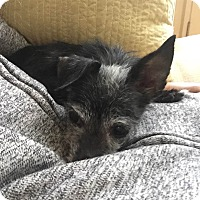 Adopt A Pet :: Thelma - Worcester, MA