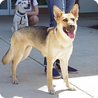 Adopt A Pet :: Zuri - Greensboro, NC