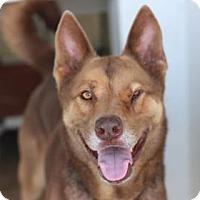 Adopt A Pet :: SPARKY REX - Kyle, TX
