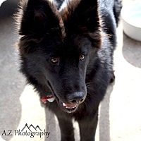 Adopt A Pet :: Zorro - Denver, CO