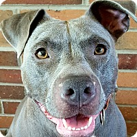 Adopt A Pet :: Beauty -COURTESY POST - Lancaster, PA