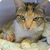 Adopt A Pet :: TAFFY - Wintersville, OH