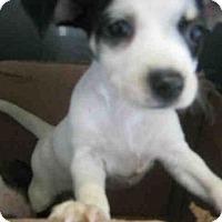 Adopt A Pet :: A404645 - San Antonio, TX