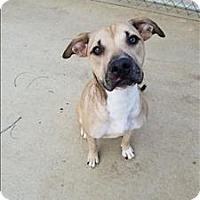 Adopt A Pet :: Tallulah - Delaware, OH