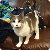 Adopt A Pet :: Hammer - Toledo, OH