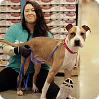 Adopt A Pet :: Kingston - Marietta, GA