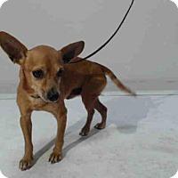 Adopt A Pet :: *CHEWY - Orlando, FL