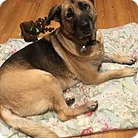 Adopt A Pet :: Gemma - Gentle Soul - Federal Way, WA