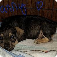 Adopt A Pet :: Danny - Niagra Falls, NY