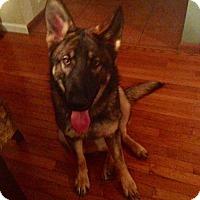 Adopt A Pet :: Shiloh - Lithia, FL
