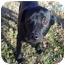 Photo 2 - Labrador Retriever Mix Dog for adoption in Whitehouse, Texas - Gracie