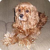 Adopt A Pet :: JOEY2 - Tacoma, WA