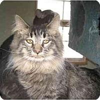Adopt A Pet :: Penny Jo - Terre Haute, IN