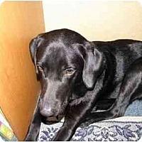 Adopt A Pet :: Pepper - Little River, SC
