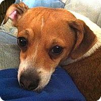 Adopt A Pet :: *Jolee - PENDING - Westport, CT