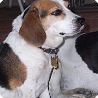 Adopt A Pet :: Kayla - Phoenix, AZ